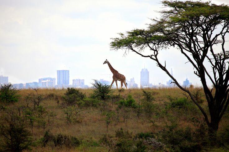 Nairobi National Park  www.alexandra-gerrard.de #Afrika#Nairobi#travelphotography