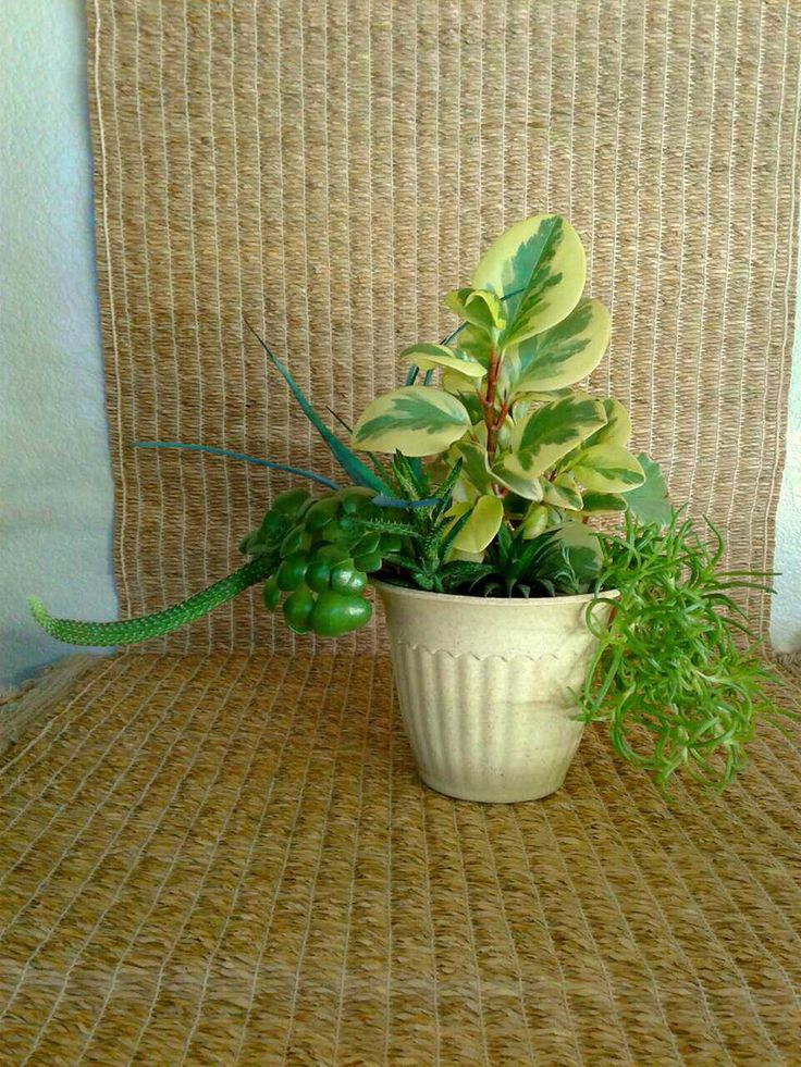 "Succulents (peperomia, aloe, aeonium, cactus, ice plant) in a 7"" light yellow bioplanter for sale from a one-person online plant nursery in Phoenix, AZ. Local meetup by appointment, or delivery may be possible for sizable orders."