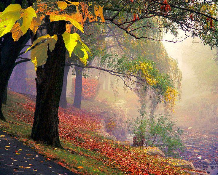 Missisauga's autumn - Mississauga, Ontario