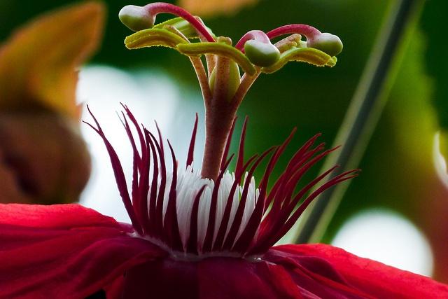 Tropical Flower    Glasshouses of Royal Botanic Garden  Edinburgh, Scotland, United Kingdom