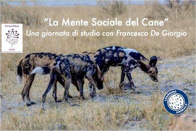 Debora Carniato  BFRAP                   Consulente Certificata Fiori di Bach per Animali: LA MENTE SOCIALE DEL CANE - Una giornata con il Dr...