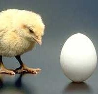 What did come first the chicken or the egg?