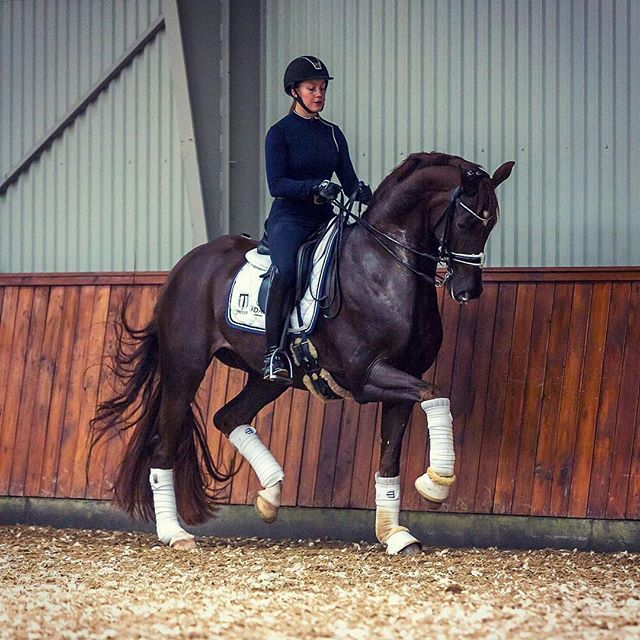 Our #thursdaymotivation pic is a #Repost of one of @eqperformance favourite very talented #dressage riders @cathrinedufour and her amazing horse Bohemian ✨