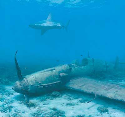 A sandbar sharks watches over the wreckage of an Me 109 in a shallow reef in the Mediterranean Sea.