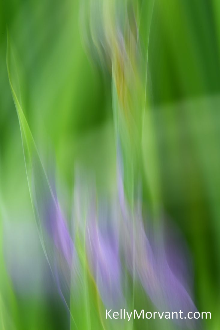 Purple Fire!  My Purple Iris abstract photo.  Using a slow shutter speed and tilting the camera up as I pressed the shutter reveals this beauty. See more @: http://fineartamerica.com/featured/purple-fire-kelly-morvant.html