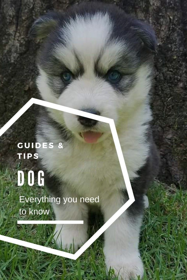 Dog Chewing Training Your Dog Tips To Make Your Job Easier