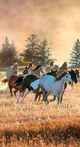 Best 20+ Mustang Horses ideas on Pinterest - photo#38