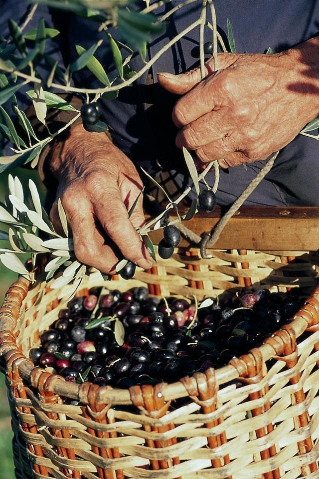 TASTE THE FOOD: da più di 5 secoli la famiglia Gonnelli si dedica alla coltivazione e alla frangitura delle olive, a soli trenta minuti da Firenze.. un benvenuto ai Salotti del Gusto per il FRANTOIO SANTA TEA! http://www.gonnelli1585.it/