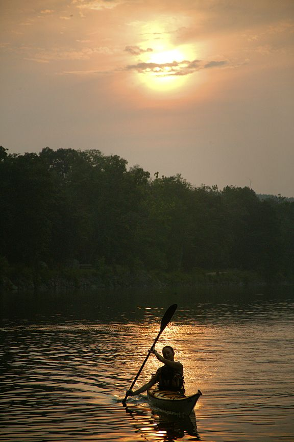 1000 ideas about chesapeake bay fishing on pinterest for Tidal fish chesapeake