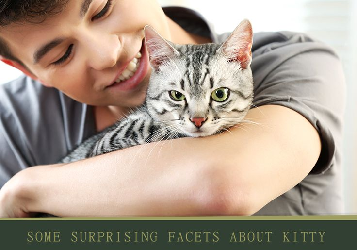 How Your #Cat Can Make You #Healthy And Energetic? -