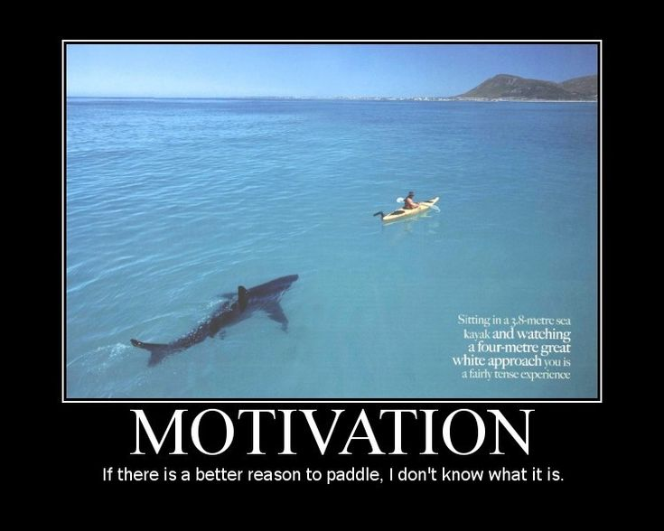 Oh Great... White: Paddles, Motivation Quotes, Get Motivation, Chalkboards Signs, Funny Photos, Funny Inspiration Quotes, Weights Loss, Sharks, Snipers Rifles