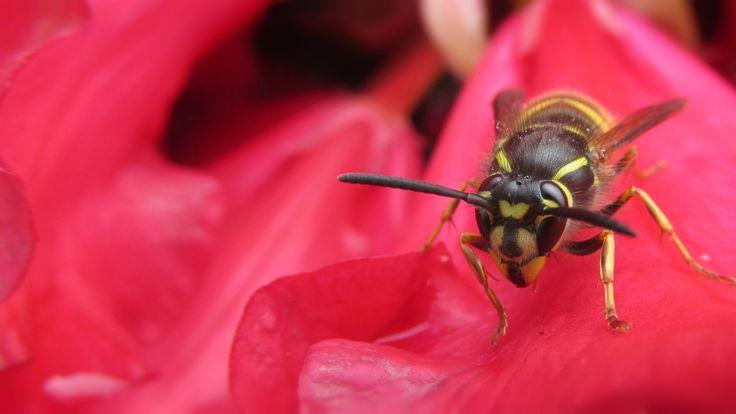Found a 'friendly' wasp