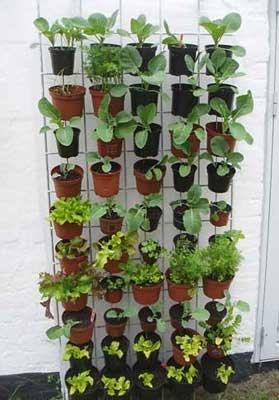 Med en lodret have på din altan kan du nemt dyrke have, hvor der kun er begrænset plads.