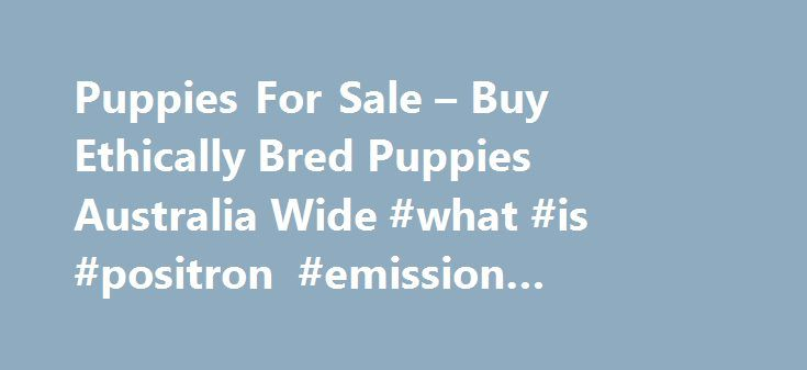 Puppies For Sale – Buy Ethically Bred Puppies Australia Wide #what #is #positron #emission #tomography http://pet.remmont.com/puppies-for-sale-buy-ethically-bred-puppies-australia-wide-what-is-positron-emission-tomography/  Puppies For Sale in Australia Healthy Happy Dogs Matter Contact your MP now We ask all our supporters, and anyone passionate about animal welfare to contact your local MP and support our call for an Upper House Committee Review into the Government s dog breeding proposal…