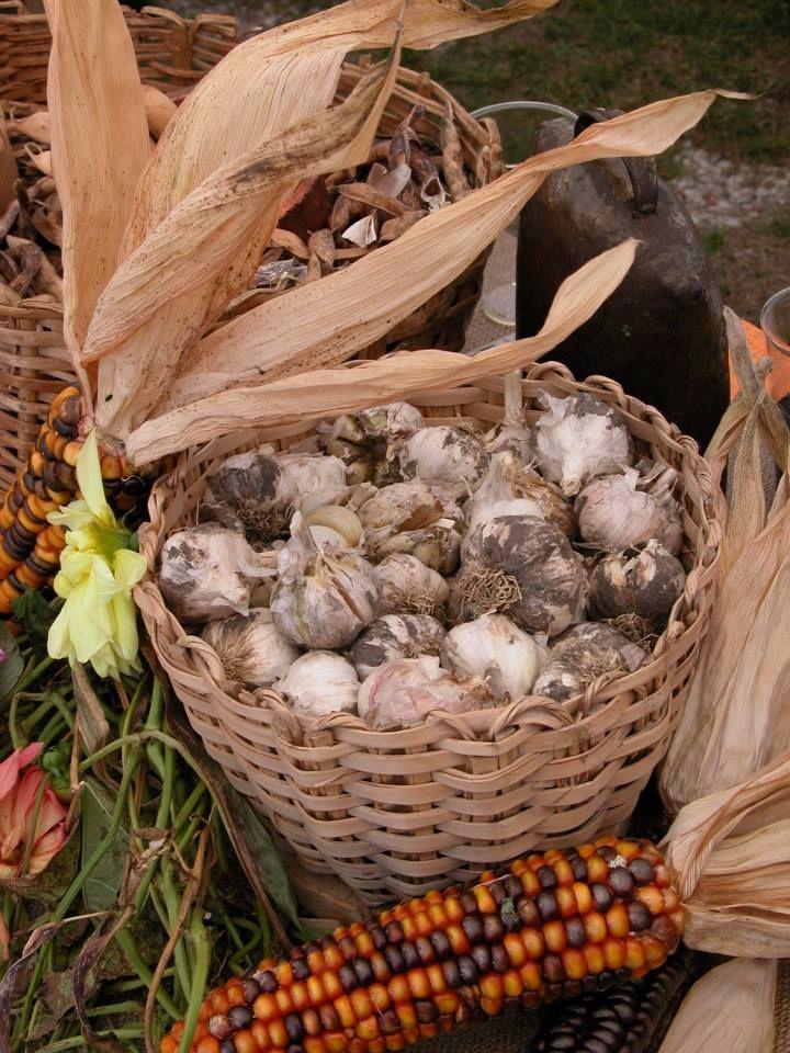 L'aglio di Resia (Italia) è particolarmente adatto alla produzione di salumi perché è dolce, privo dell'aroma a volte acre delle varietà più comuni. Le coltivazioni della vallata sono naturali. ® Marco di Leonardo