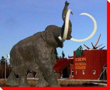 Mammoth  Whitehorse, Yukon