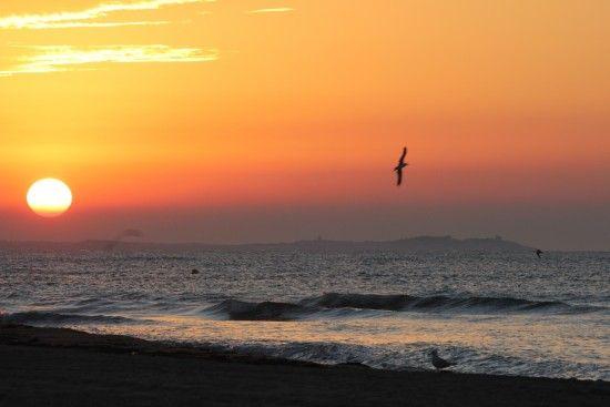 """""""El vuelo madrugador al amanecer """""""
