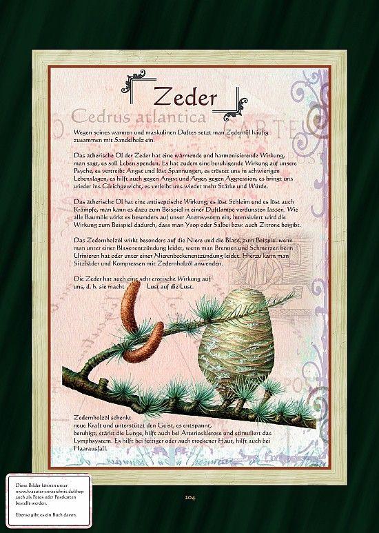 Zeder                                                       …
