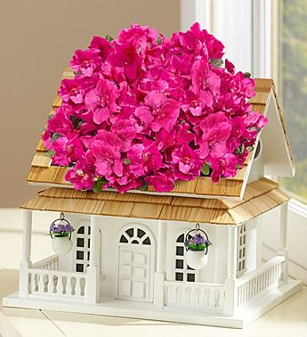 Birdhouse of Blooms available on 1800Flowers ✤ ❤ ♪ ♪╭✿✿╯❤ ♥ ♪ ✿⊱╮✼✼