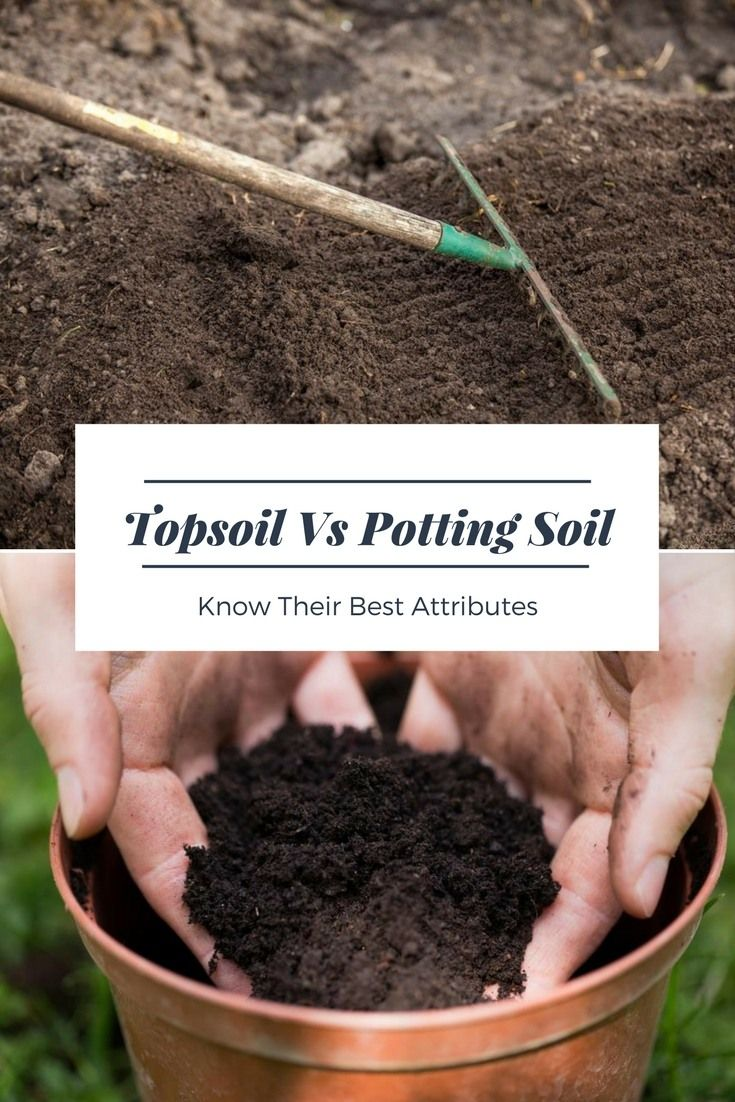 Topsoil Versus Potting Soil Know Their Best Attributes Top Soil