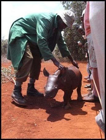 Sweetest baby rhino at the david Sheldrick Foundation in Nairobi, Kenya