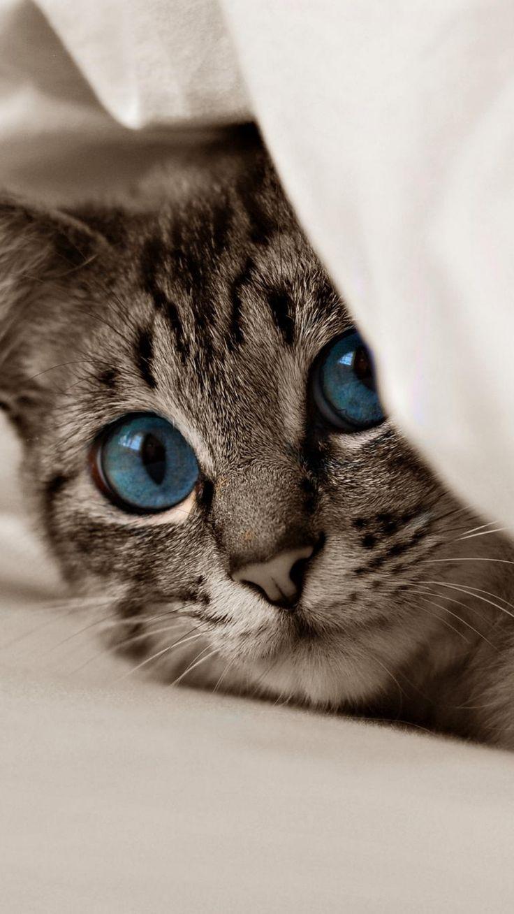 1080x1920 Wallpaper kitten, cat, face, blue eyes