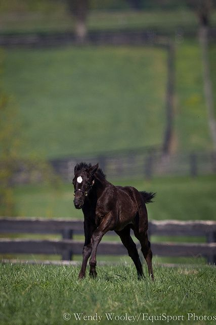 A 2012 Einstein filly out of Perfect Energy.  She's about 45 days old.
