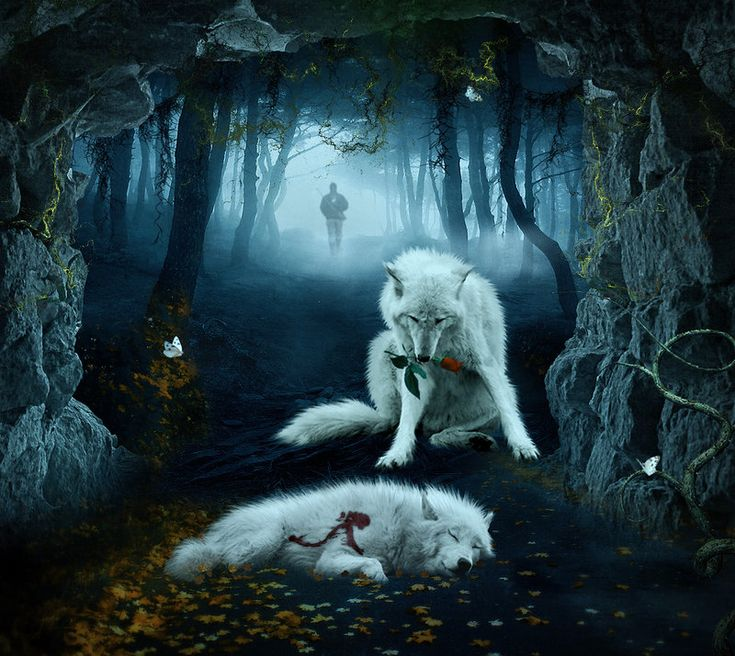 Amazing Wolf: Lost Rose By =Unfeigned-Dreams On DeviantART