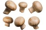 """Mushrooms  """"Morels in the spring, truffles in winter and summer, chanterelles in the fall, lobster mushrooms in summer,"""""""