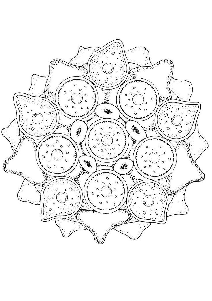 Mandala : Coloriage de l'algue verte