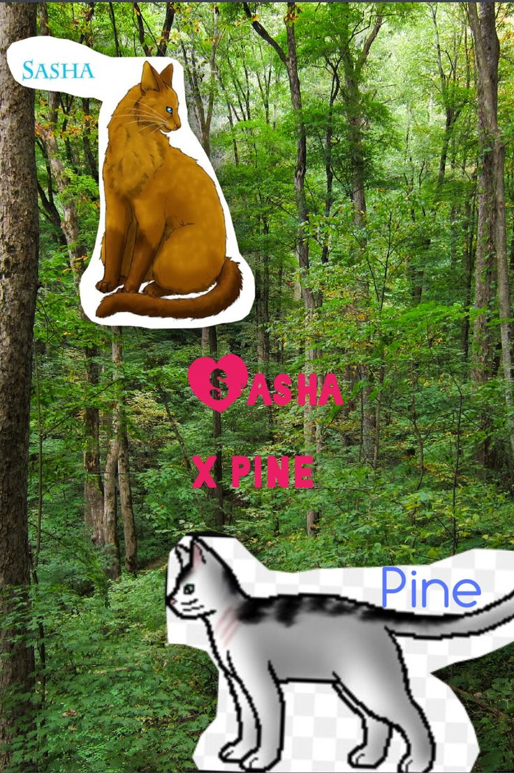 How is this NOT a thing yet!  Sasha x pine !!!!!!!❤️