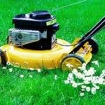 Lawn Mowing Price Guide Image