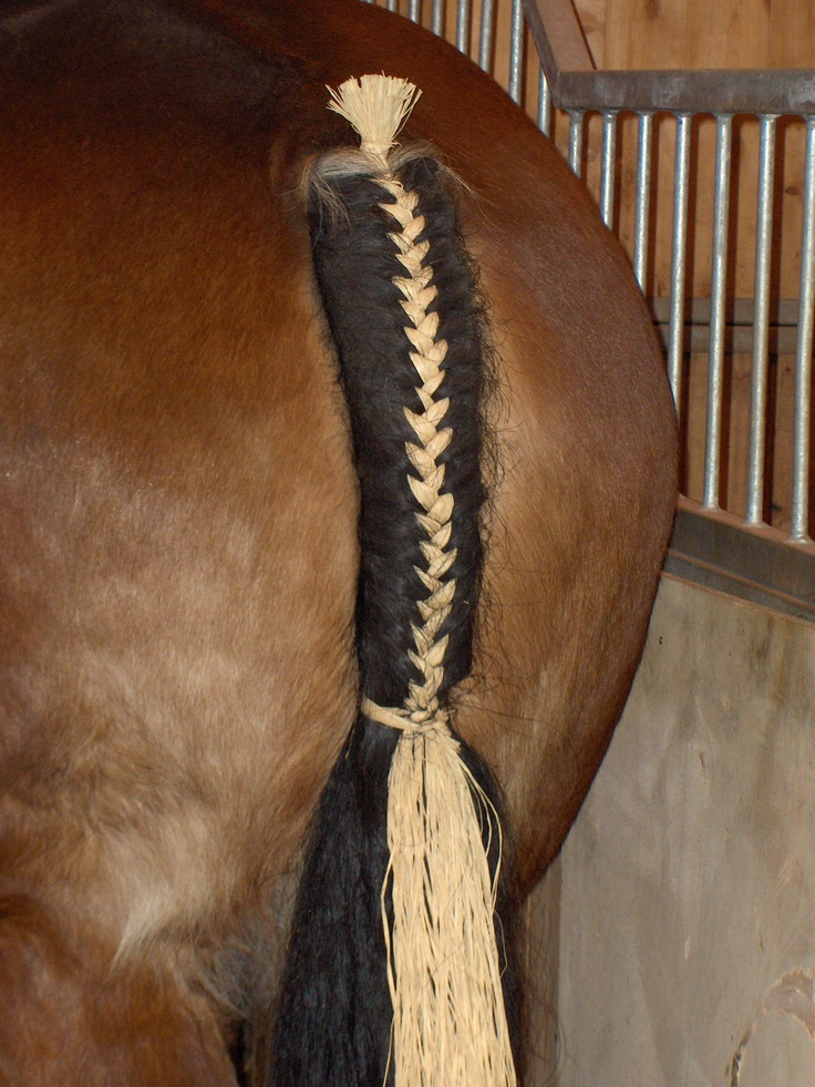 59 Best Images About Braiding Your Horses Mane And Or
