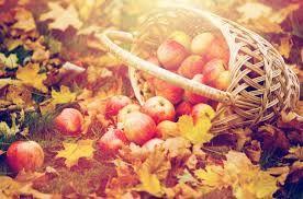 """Résultat de recherche d'images pour """"accumulation fruits fleurs automne"""""""