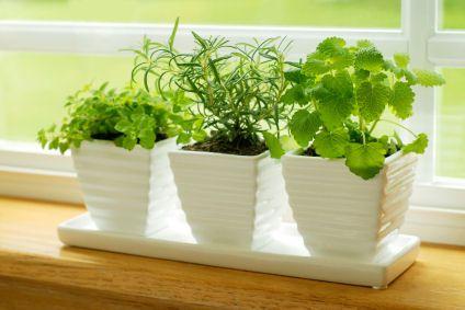 How to Grow Herbs Indoors. Very helpful!