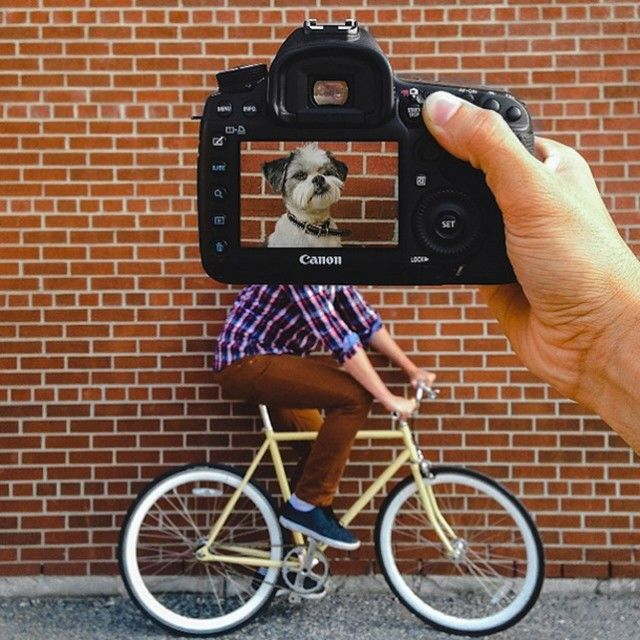 Creative Pet Portraits – Fubiz™ Zach Rose