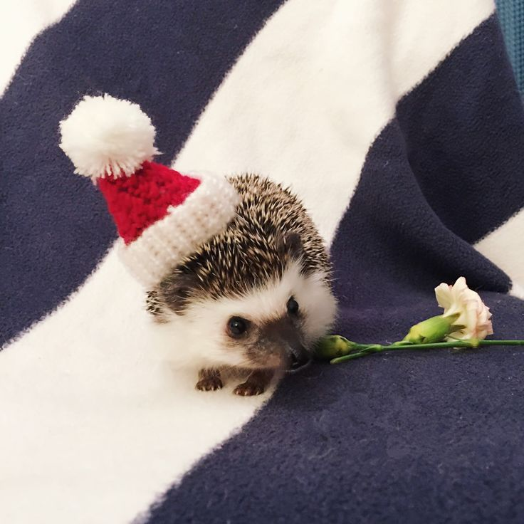 Christmas Hedgehog Knitting Pattern : 17 Best images about Feathered, Furry and Finned Friends ...