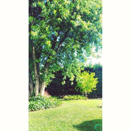 Peaceful place 🌳🌿🌞#peace #relax #garden #green #sunny ©Annalisa Turolla