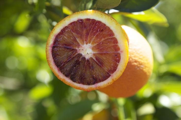 Cut blood orange on tree