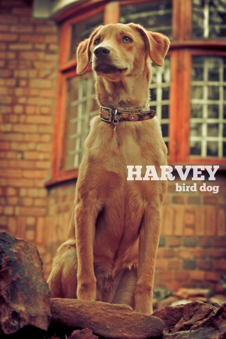 This guy is just loads of awesomness! Harvey such a little legend in our home...