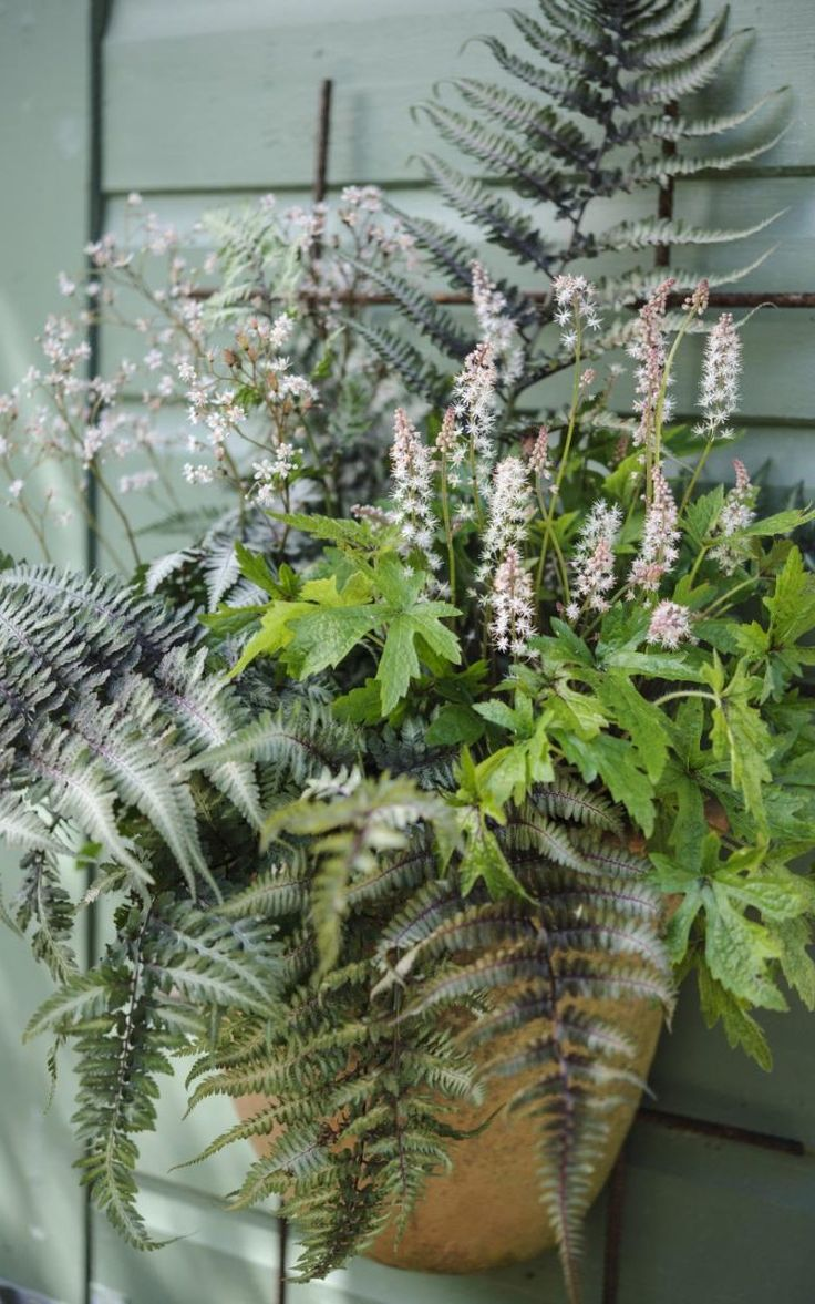 Ferns in a wall pot