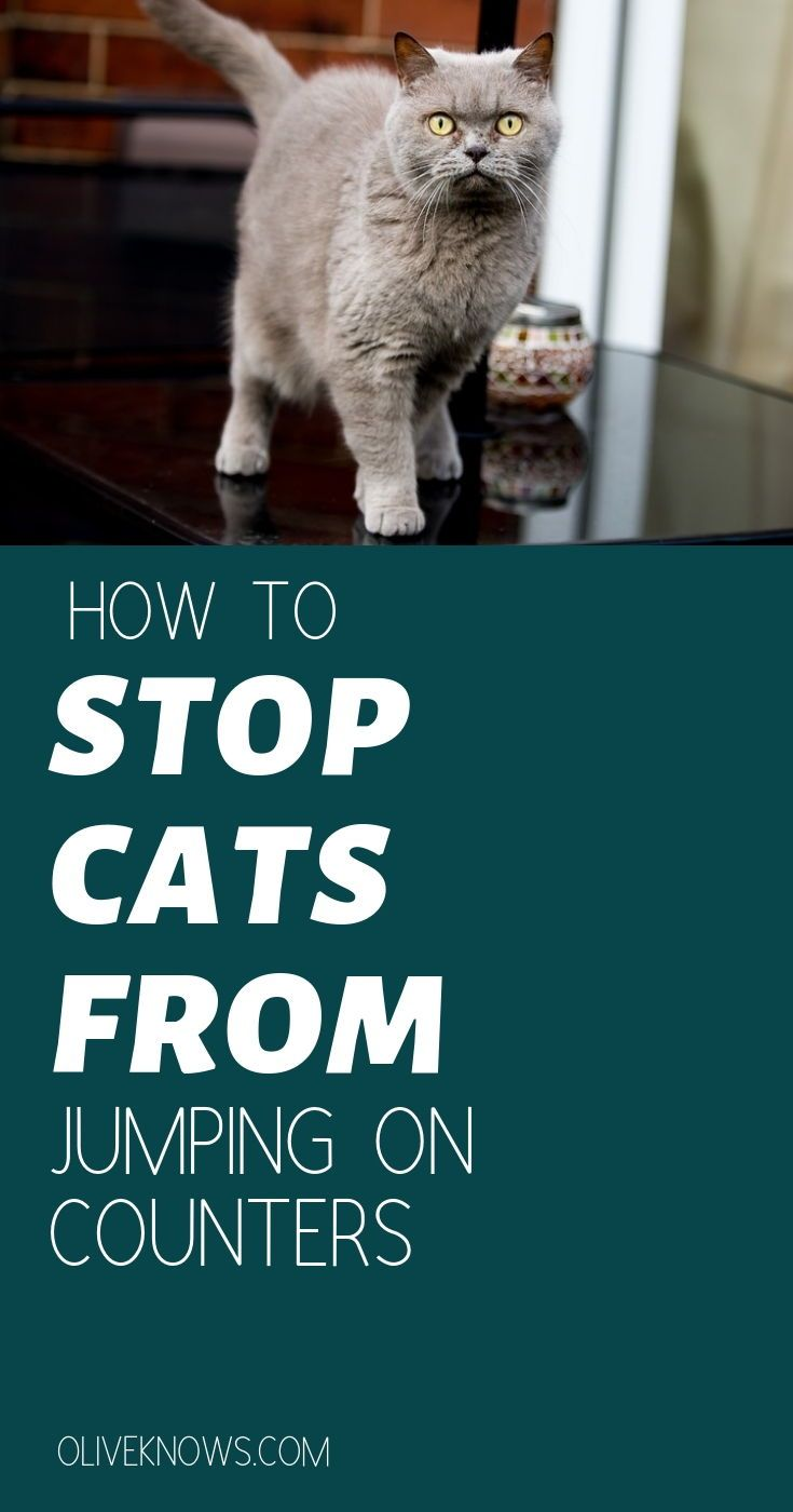 How To Stop Cats From Jumping On Kitchen Counters Finally Oliveknows Cat Care Cat Safety Cat Training