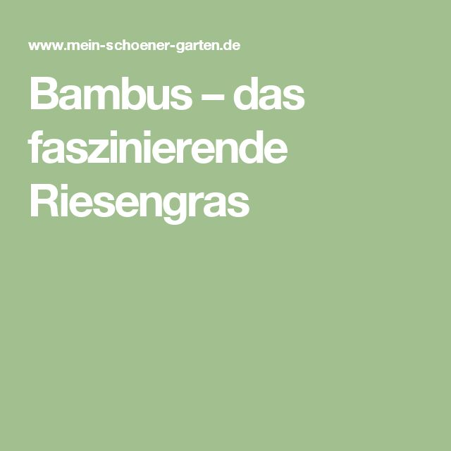 Bambus – das faszinierende Riesengras