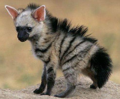 Das ist wohl eines der süssesten Tiere der Welt!