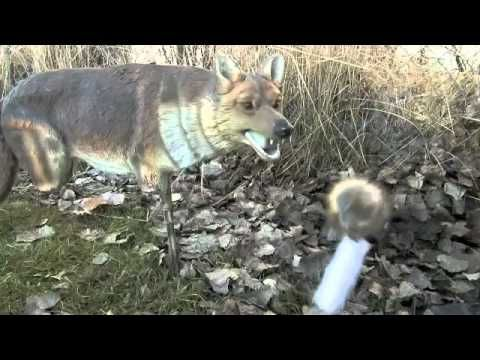 All the coyote hunting gear you need to know about!