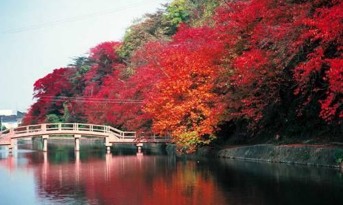 Autumn leaves Toyama Japan 富山 高岡古城公園