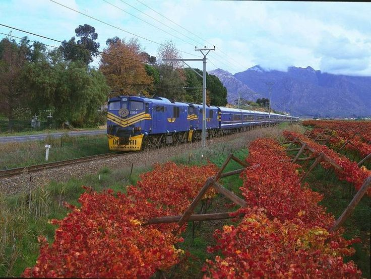 Looking for a luxury rail tour? Have a look at our Blue Train package: http://www.africanoutposts.co.za/packages/detail/news/the-blue-train/