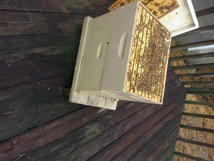 Spring Into Action But Don 39 T Open The Hive Too Soon Keeping Backyard Bees Action Backyard Bees Don Backyard Bee Spring Into Action Labyrinth Design