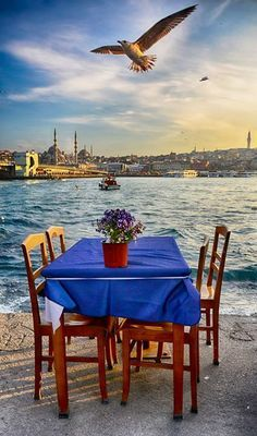 İstanbul.By Yaşar Koç.