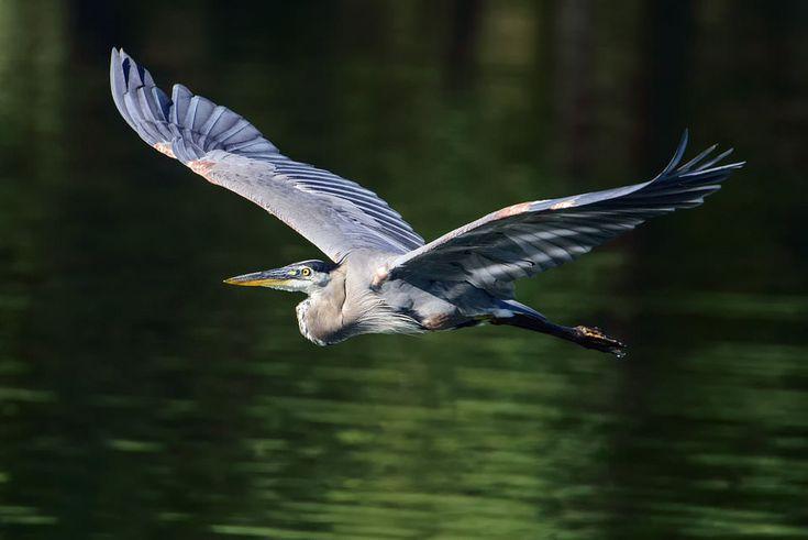 Nikon D810 Bird Photography (5)